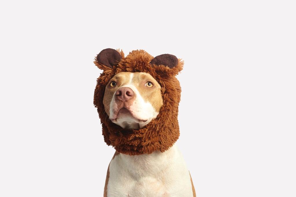Gemini (May 21-June 21) — American Pit Bull Terrier