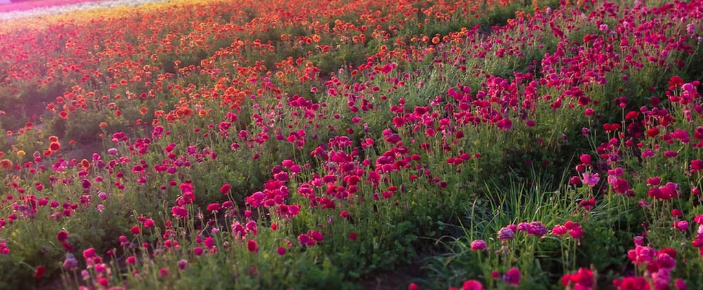 أفضل الأماكن لرؤية الأزهار في العالم