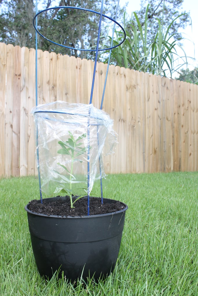 DIY Greenhouse Hack