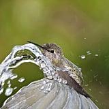 Fill Up a Bird Bath