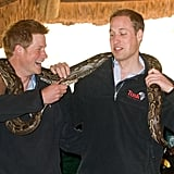 Harry and William played up to the cameras with a 16-foot-long rock python during their tour of Botswana in 2010.