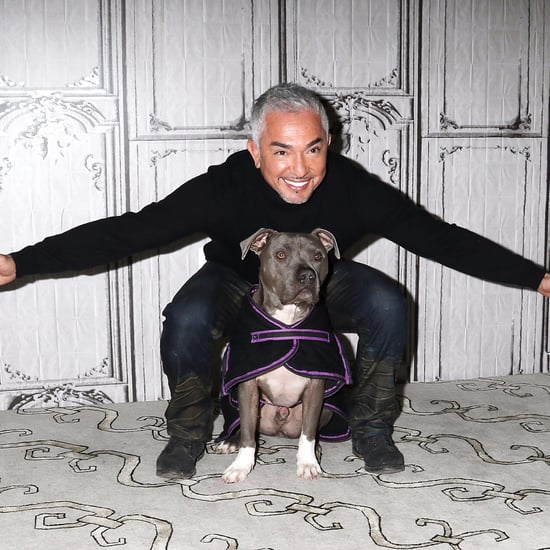 Cesar Millan's Favorite Movie Pets