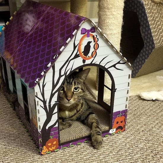 Aldi's Selling Halloween Cat Houses For Just $8