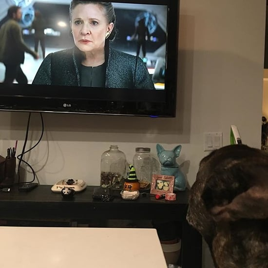 Carrie Fisher's Dog Watching Star Wars Trailer