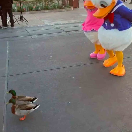 Donald and Daisy Duck Meet Real Ducks at Disney