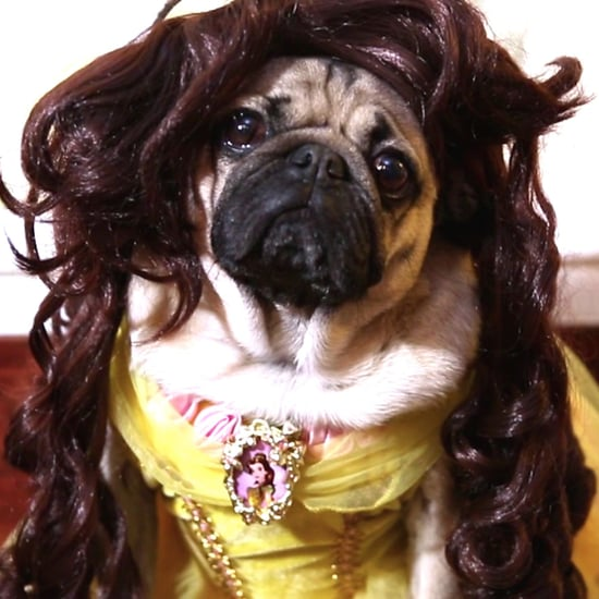Doug the Pug Beauty and the Beast Video