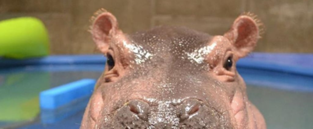 Fiona the Hippo Adorable Photos on First Birthday