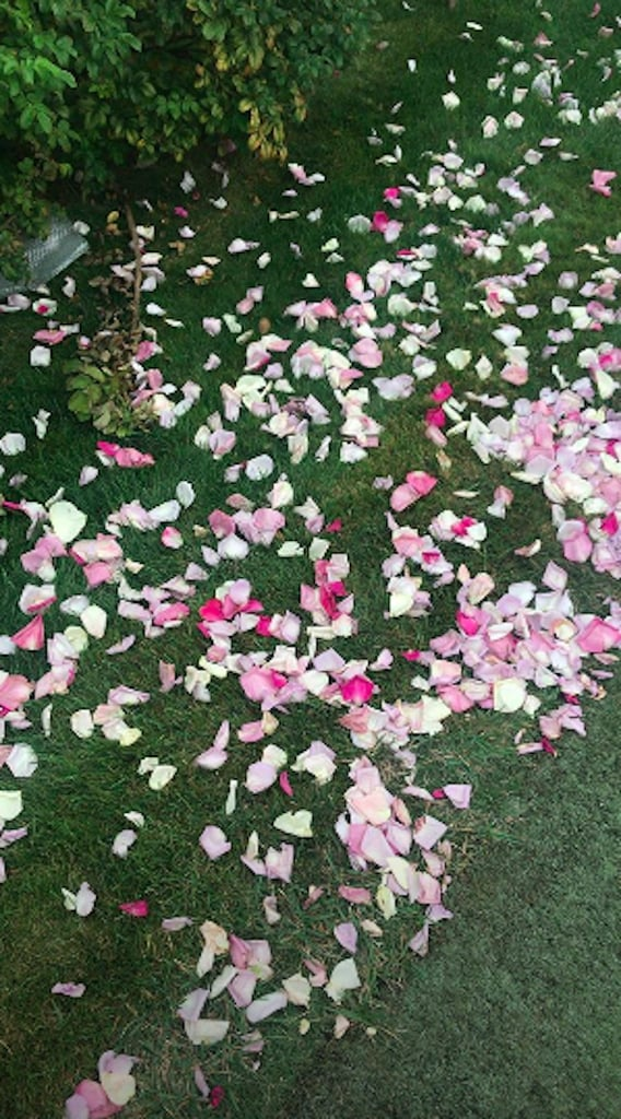 Gorgeous Pink Petals Covered the Ground