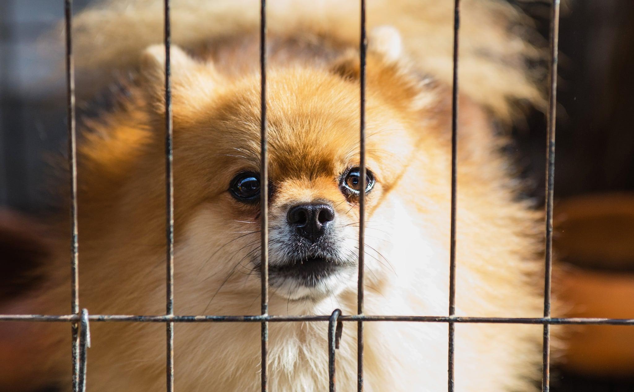 Should You Crate Your Dog All Day? | POPSUGAR Moms