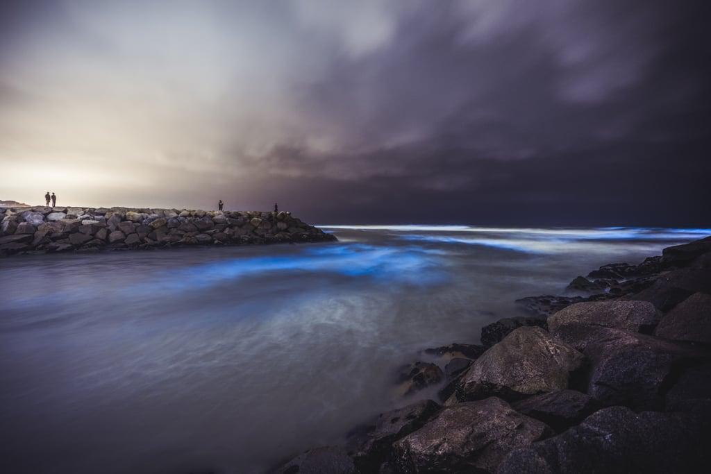 Walk Along Bioluminescent Bay in San Diego