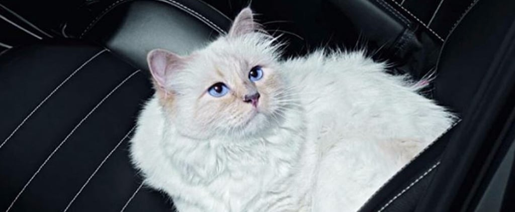 Choupette, the World's Chicest Cat, Just Divulged Her 7 Purr-fect Beauty Secrets