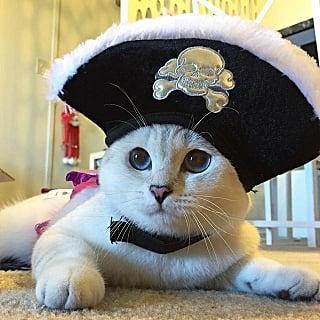 Cats in Halloween Costumes | Instagram
