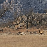 Oklahoma: Wichita Mountains Wildlife Refuge