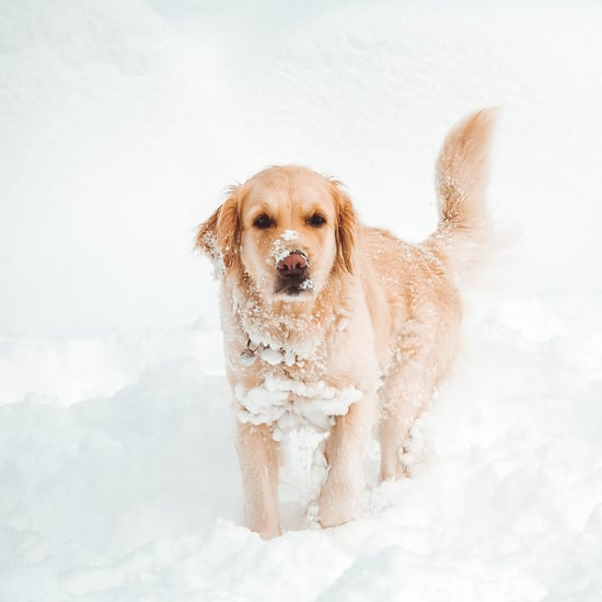 How to Remove Ice and Snow from a Dog's Fur
