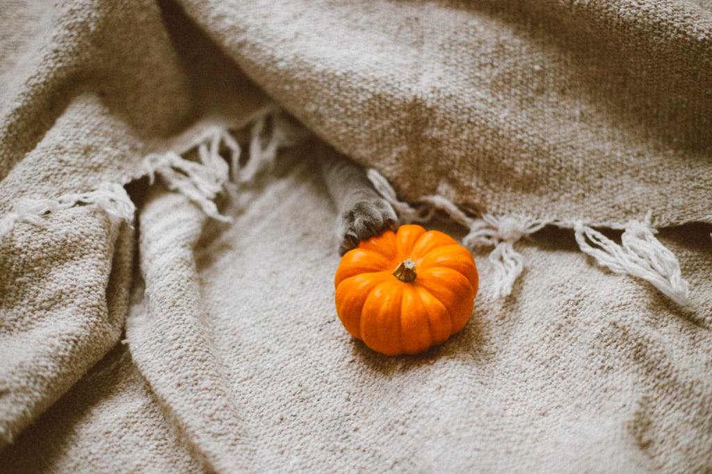 Affordable Fall Activities