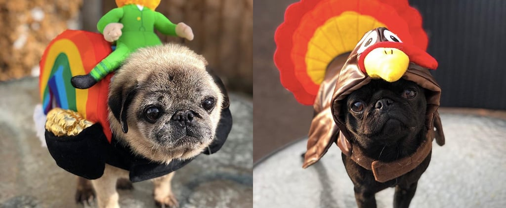 This Pug Rescue Has an Instagram Account That Will Melt You