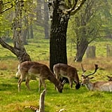 South West London: the Tamsin Trail Around Richmond Park