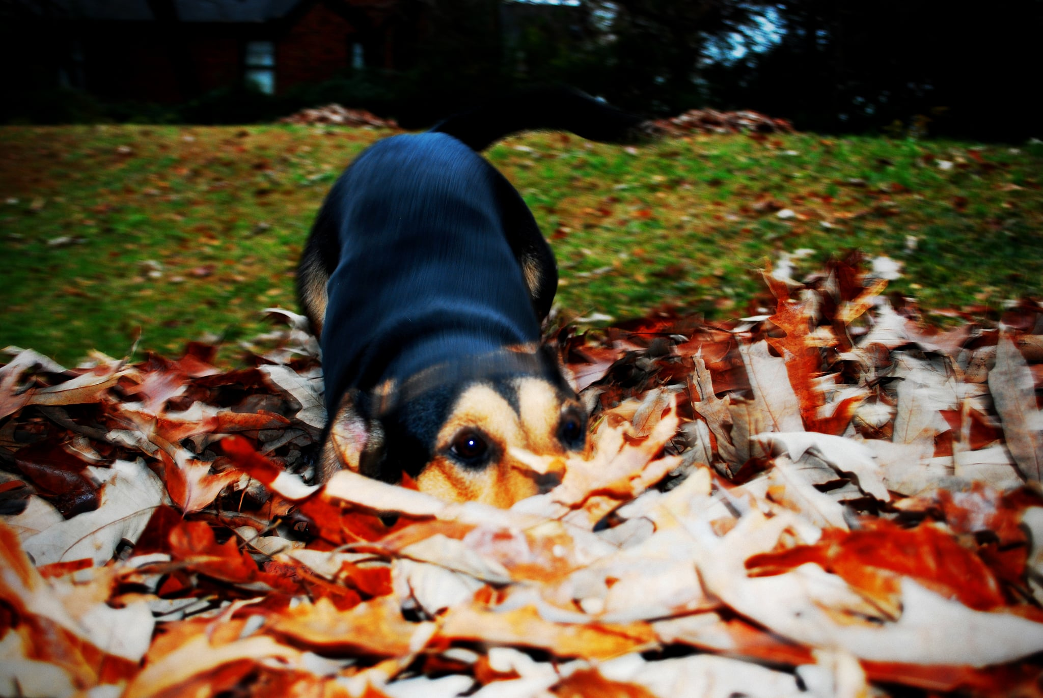 I am the creature that lives in the leaves! Source: Flickr user B Rosen