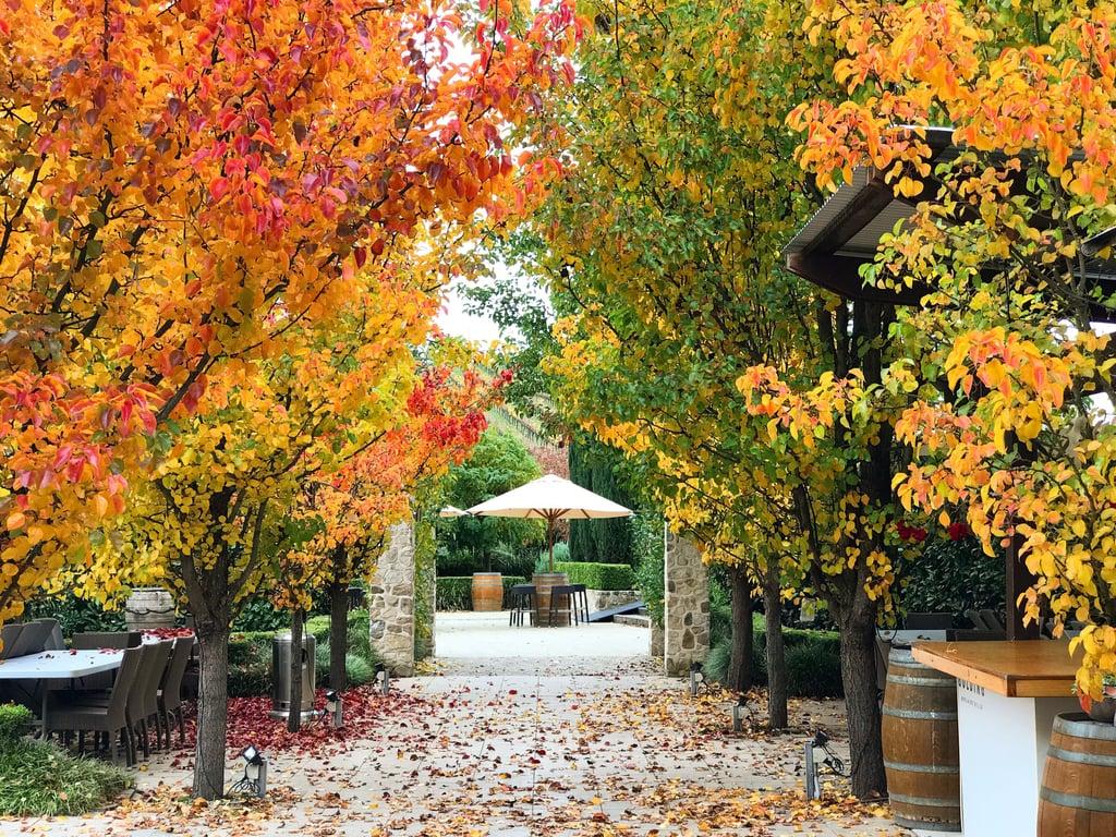 Golding Wines, Lobethal
