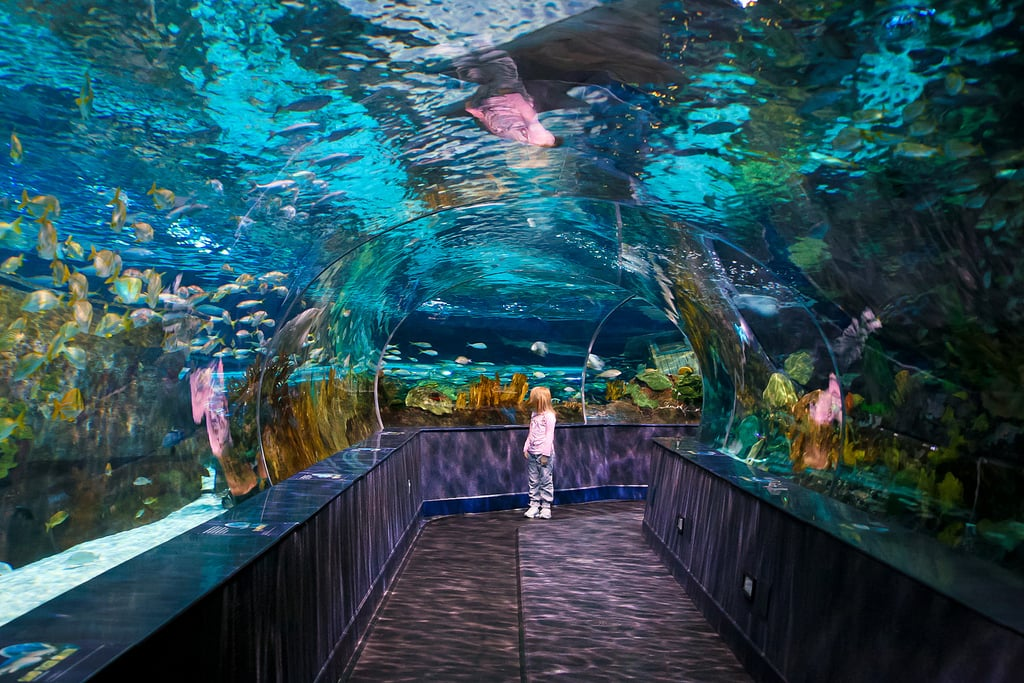 Ripley S Aquarium Of The Smokies Gatlinburg Tn Best