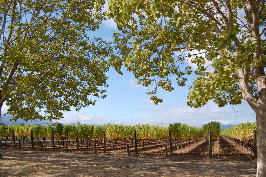 Napa and Sonoma Wine Country (San Francisco, CA)
