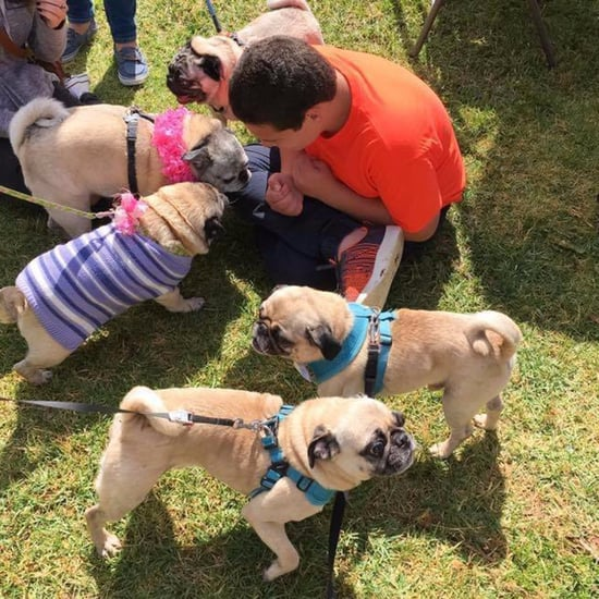 Sister Planned Pug Birthday Party For Boy With Autism
