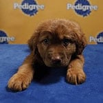 Into the Huddle With All the Best of My Puppy Bowl Coverage!