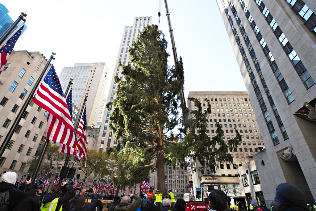 Rockefeller Centre Christmas Tree Reactions