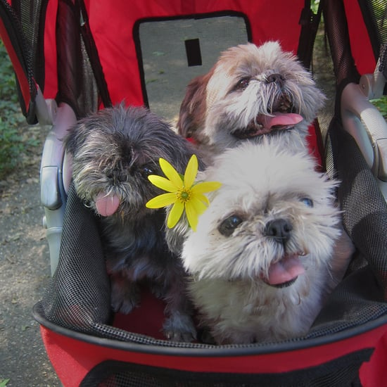 Why You Shouldn't Put Your Dog in a Stroller