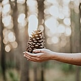 Collect pine cones.