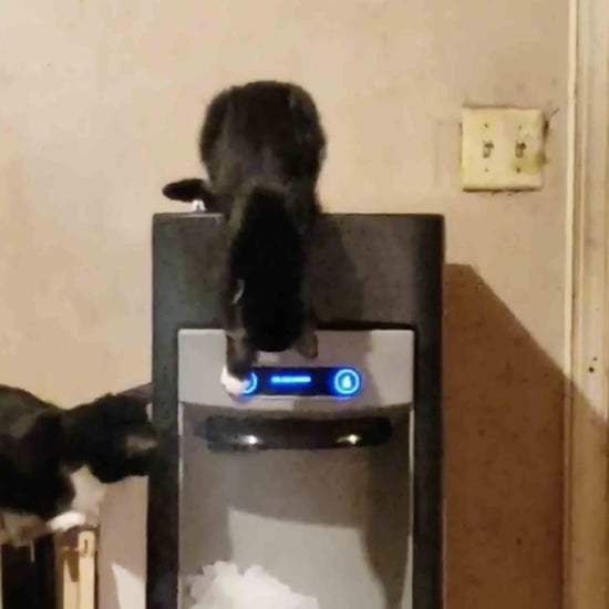 Cats Playing With the Ice Machine | Video