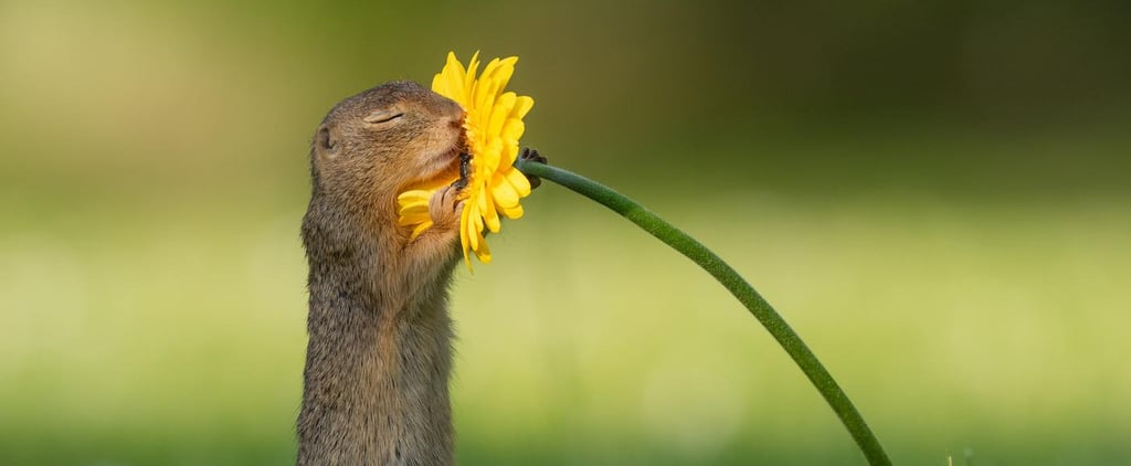 Photos of Squirrel Smelling Flowers From Dick van Duijn