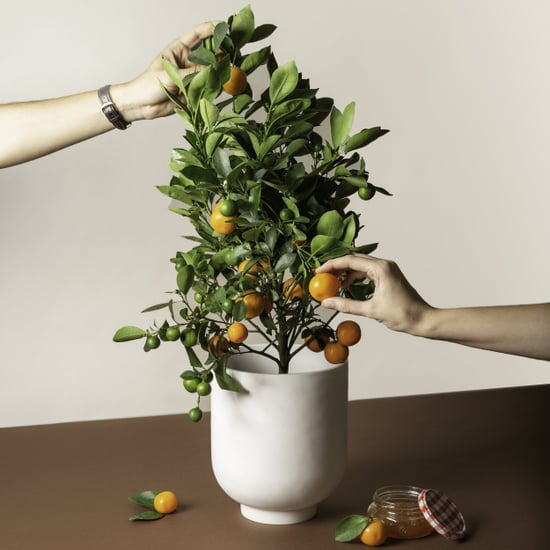 Get Mini Citrus Trees Delivered to Your Doorstep