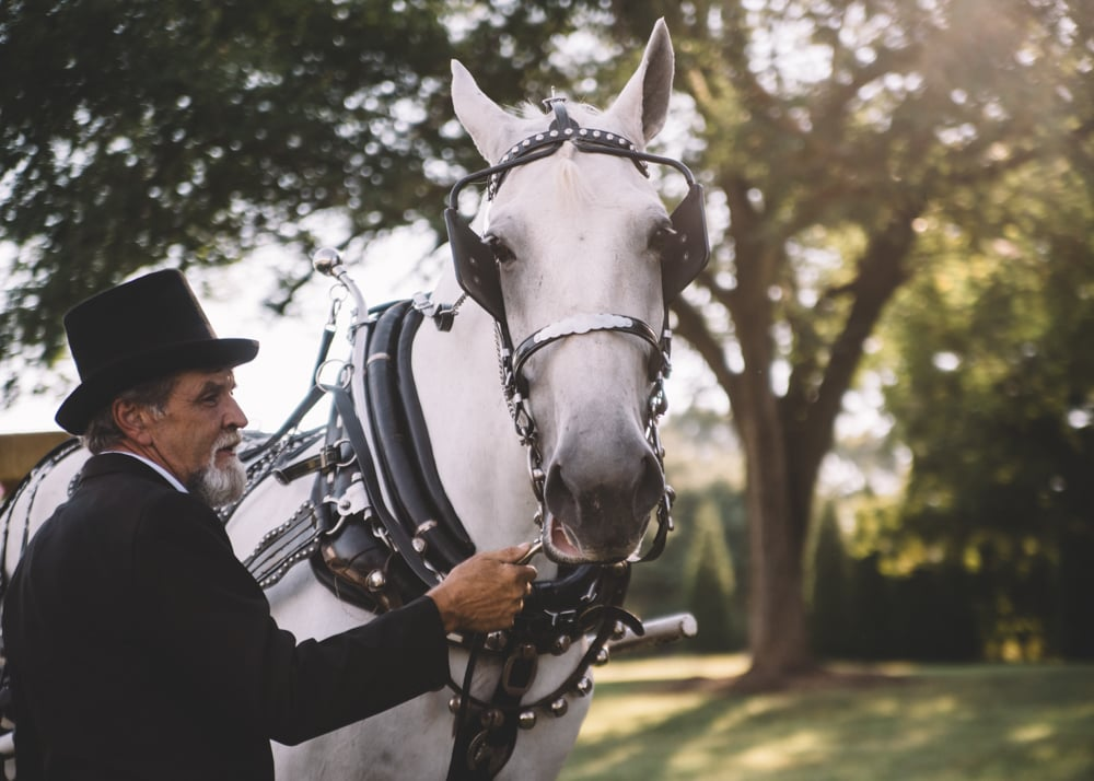Wedding With a Horse-Drawn Carriage