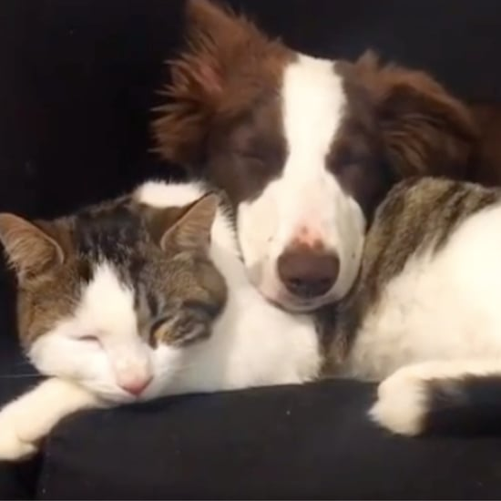 These Videos of Cats and Dogs Prove They Can Be Best Friends