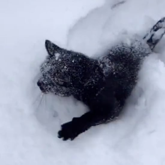Black Cat Running Through Snow | TikTok Video