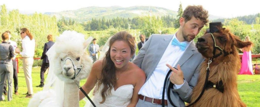 Couples Can Invite These Llamas to Their Weddings, Because Humans Are Overrated
