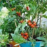 Lowe's — Bonnie Plants