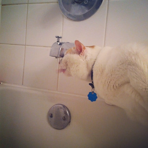 Who Needs a Water Bowl?