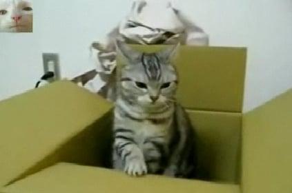 Cat Sends SOS Telegram