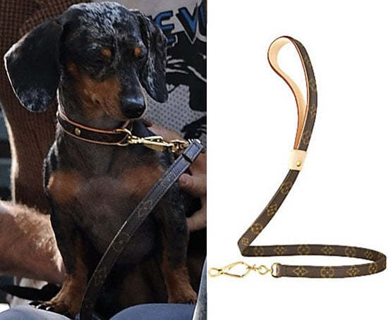 Do Agyness Deyn's Doggies Have LV Knockoffs or Not?