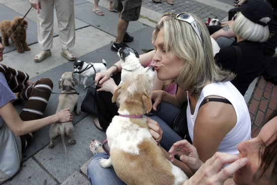 Do Tell: How Much Thought Did You Give to Dog Breed?