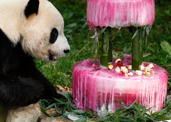 Oh Snap! Happy 4th Birthday, Giant Panda