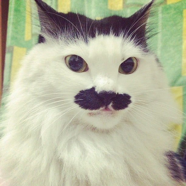 "Can someone say ""mustache envy""? You thought your dad had the coolest mustache in the world . . . until you met this guy. Source: Instagram user xixilan_788"