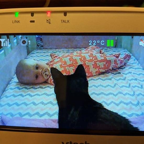 Cats Befriend Newborn Baby