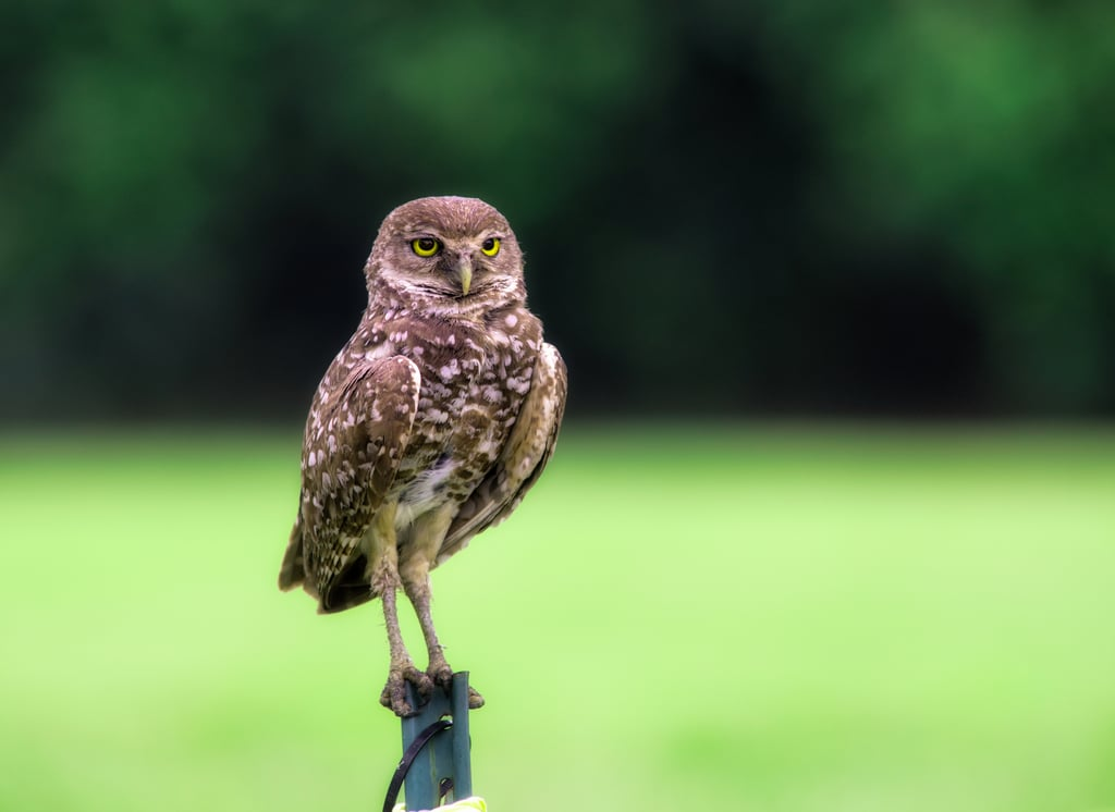 And Then There's the Owl Theory