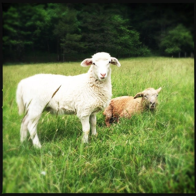 Leaping Lamb Farm Stay Or The 18 Quirkiest Places To Stay For The Unconventional Traveler Popsugar Smart Living Photo 9