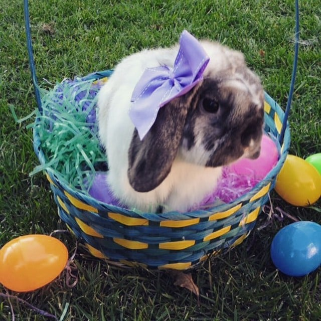 Easter Bunny Fun Facts and History | POPSUGAR Pets