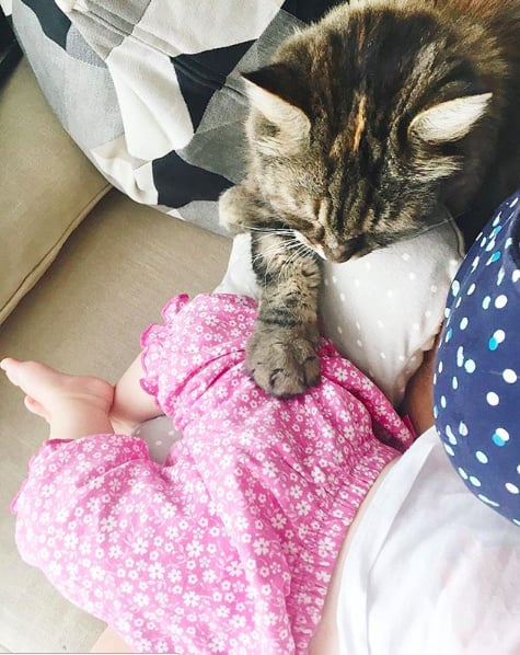 Is this the cat version of holding hands?