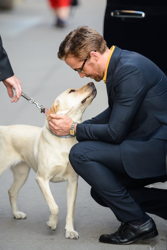 Ryan Gosling Petting Dog in NYC May 2016
